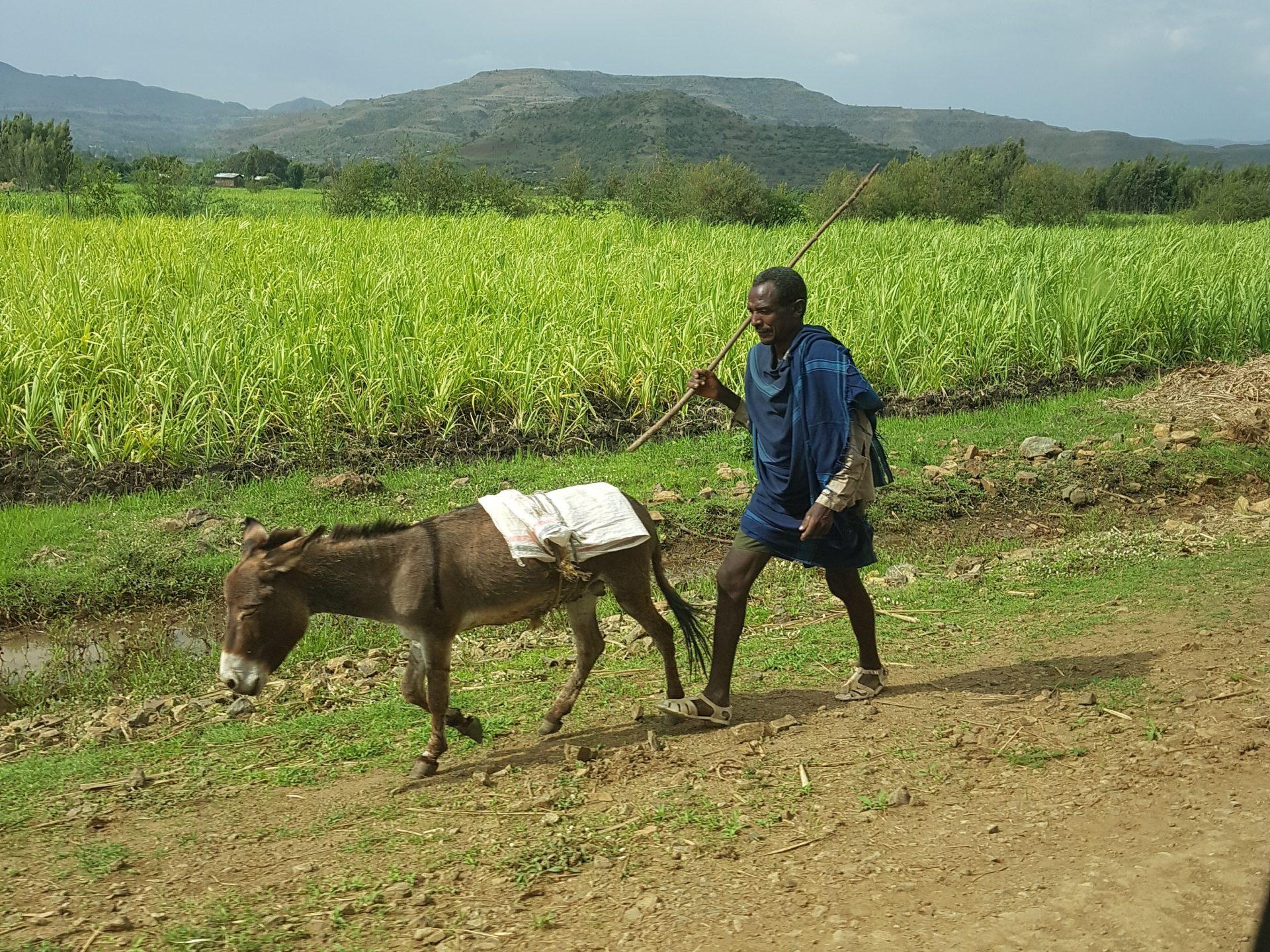 Äthiopien Reise Stock Stab