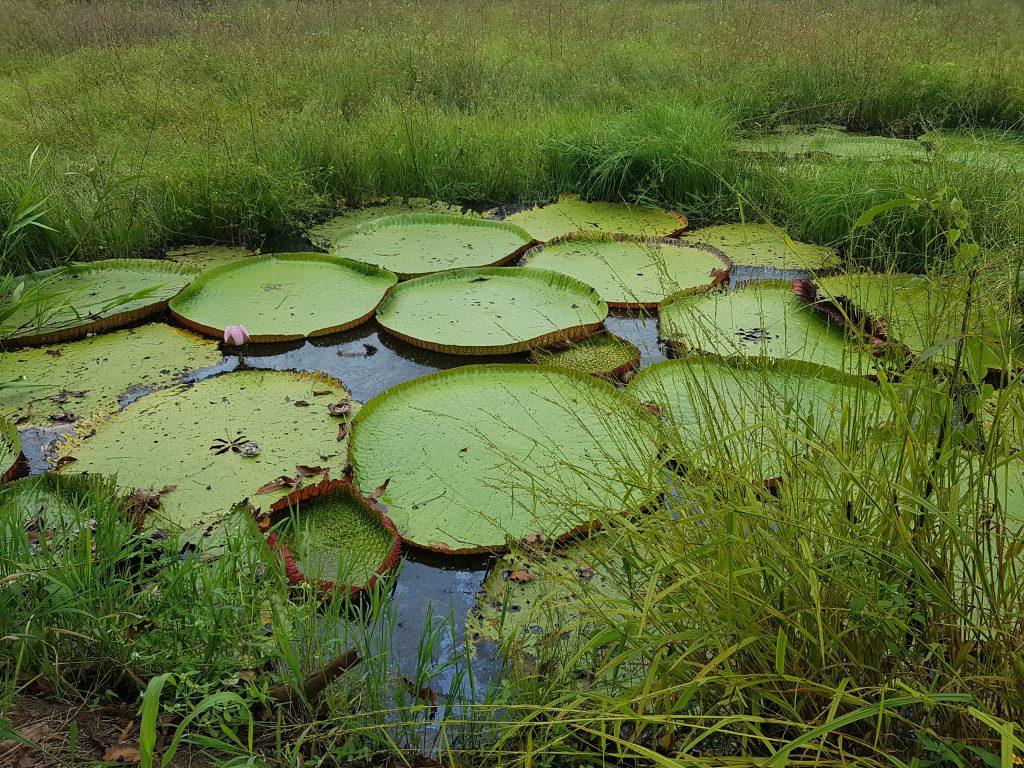 Amazonas Dschungel Regenwald verlaufen gefährlich Tour